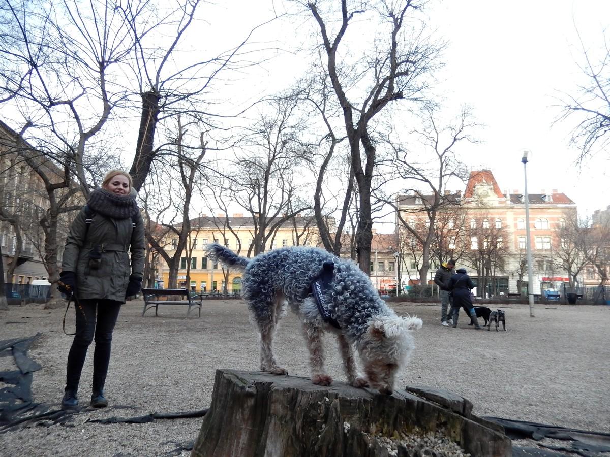 luśka psi wybieg budpaeszt z psem