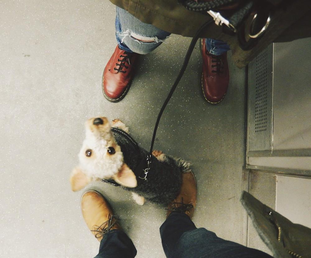 berlin metro z psem