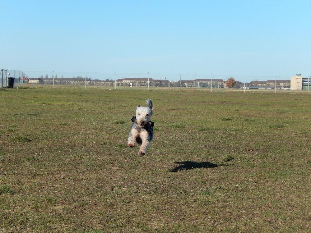 wybieg dla psów berlin