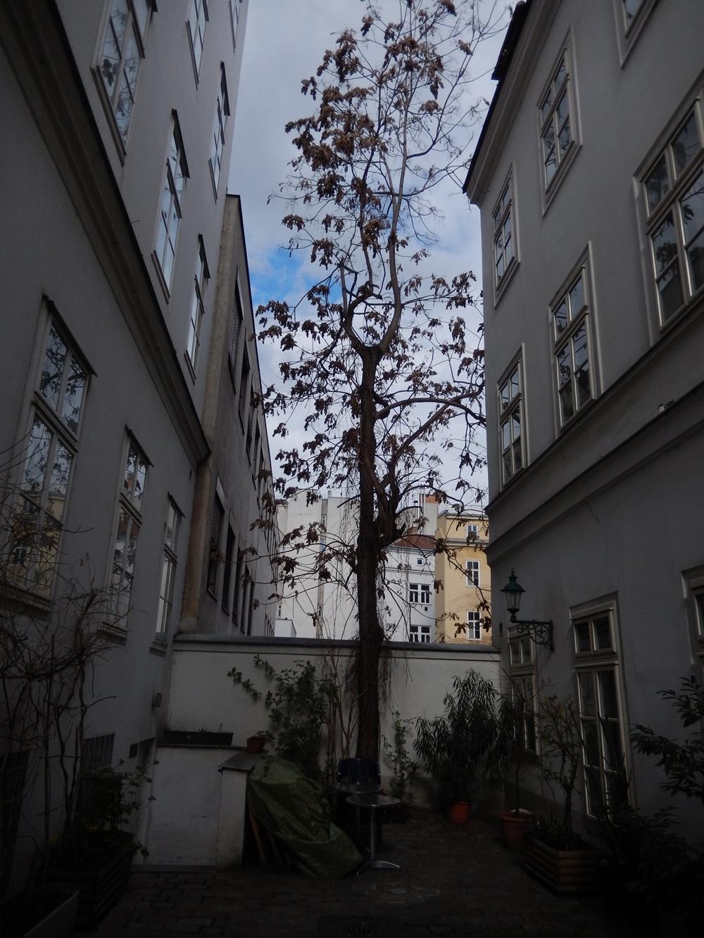 freiwilligerdurchgang wiedeń