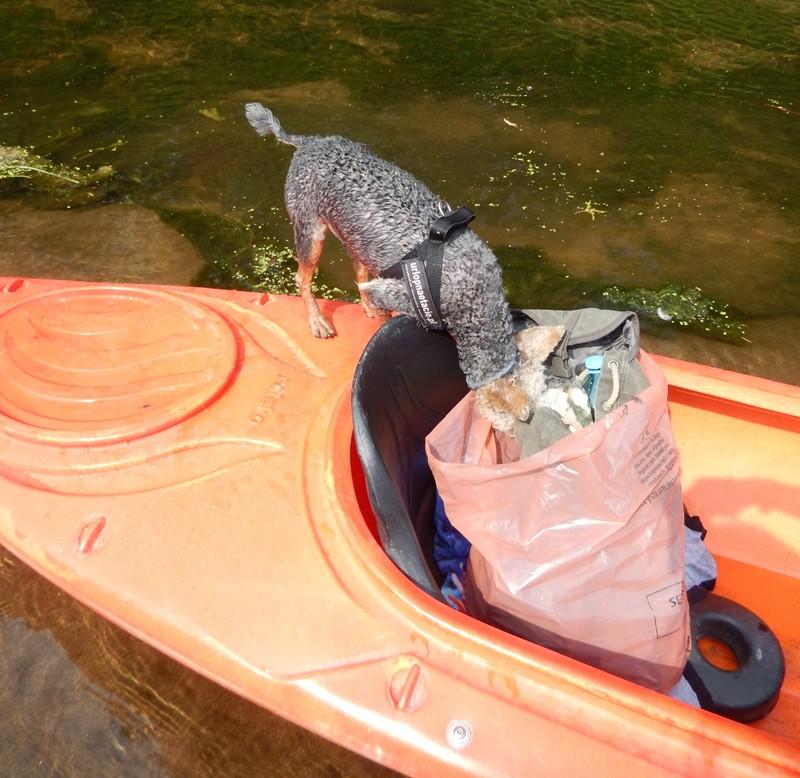 Przed wilgocią plecak chroni worek na śmieci. Przed Luśką plecaka nic nie ochroni...