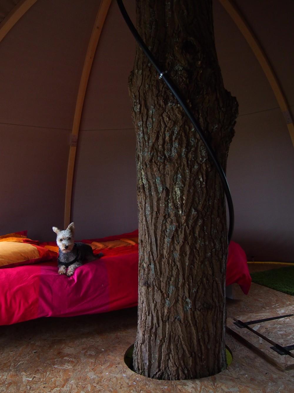 TreeCamp, Etretat
