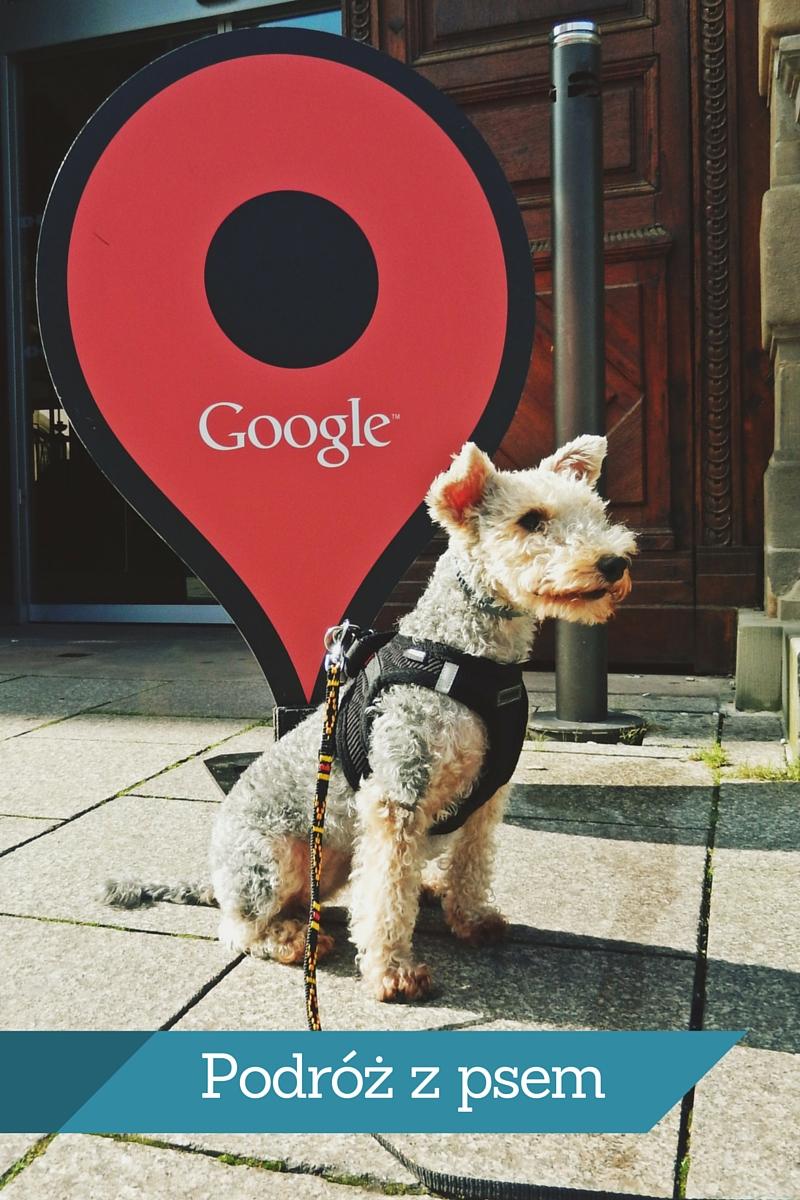 Podróż z psem – mini poradnik