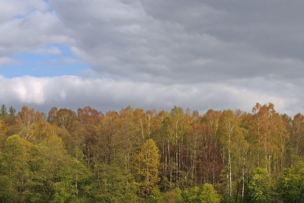 Park Krajobrazowy Wzgórz Dylewskich