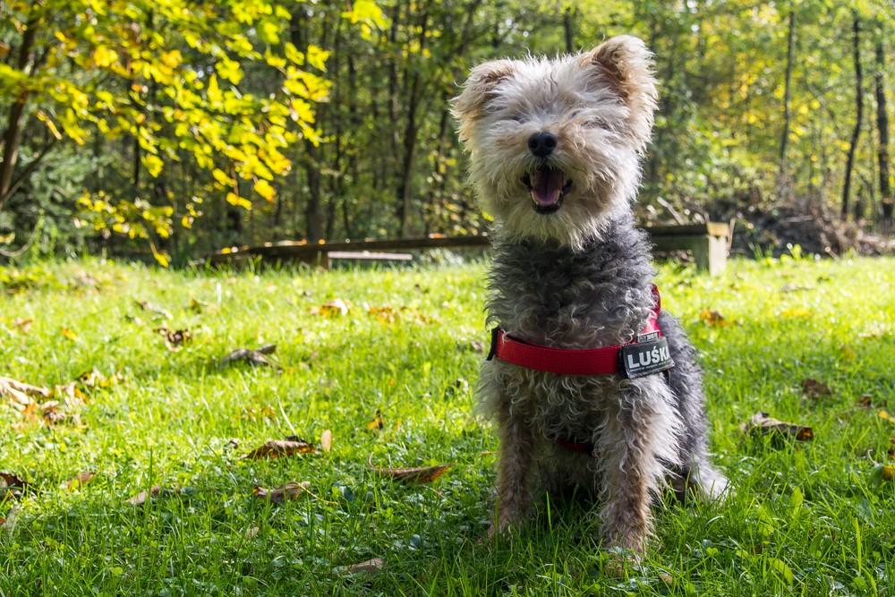Wybiegany pies równa się szczęśliwy pies.