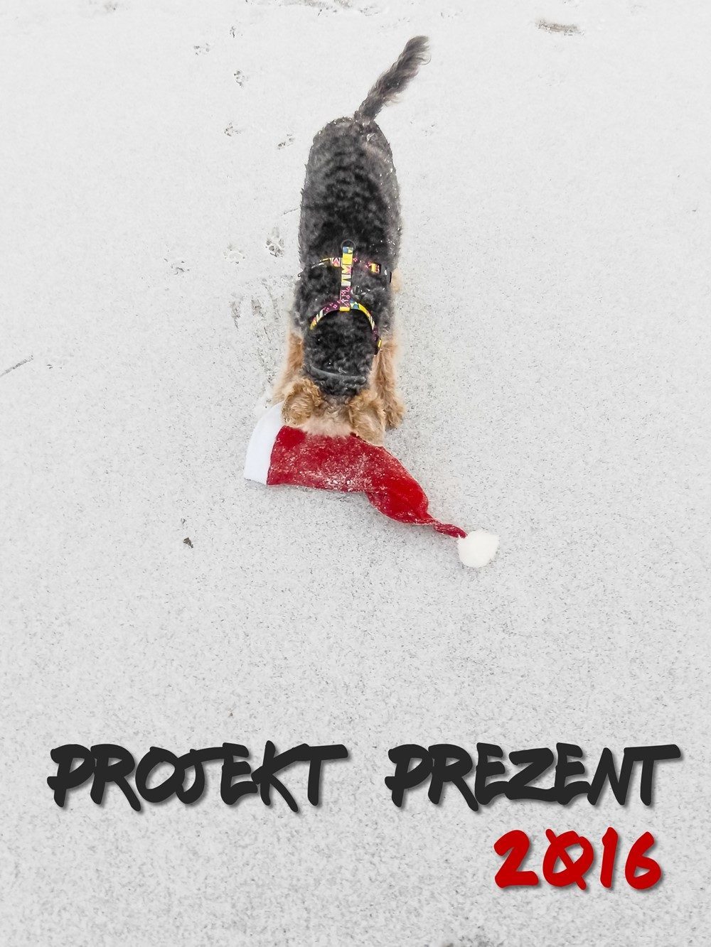 projekt prezent