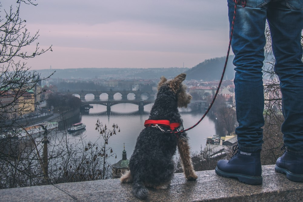 praga z psem