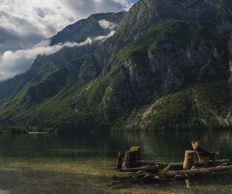 jezioro bohinj z psem