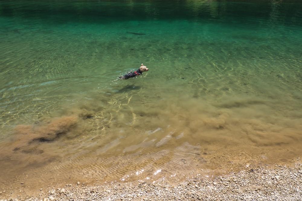 lago di braies z psem