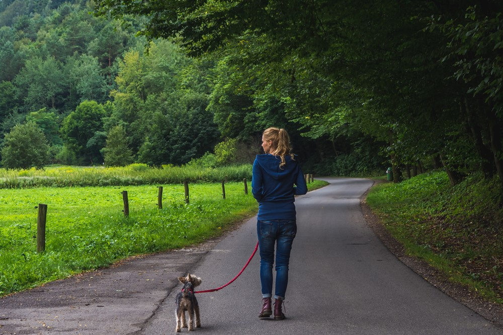 dolina będkowska z psem