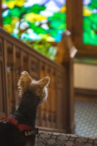hotel dębowy góry sowie nocleg z psem
