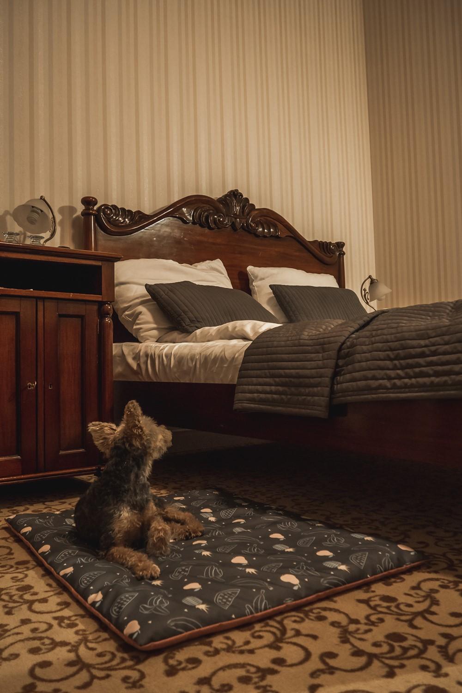 hotel dębowy z psem