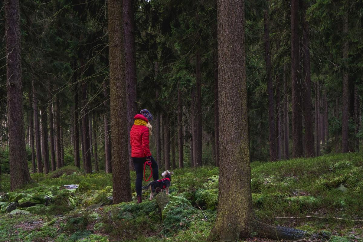 lasy góry bystrzyckie