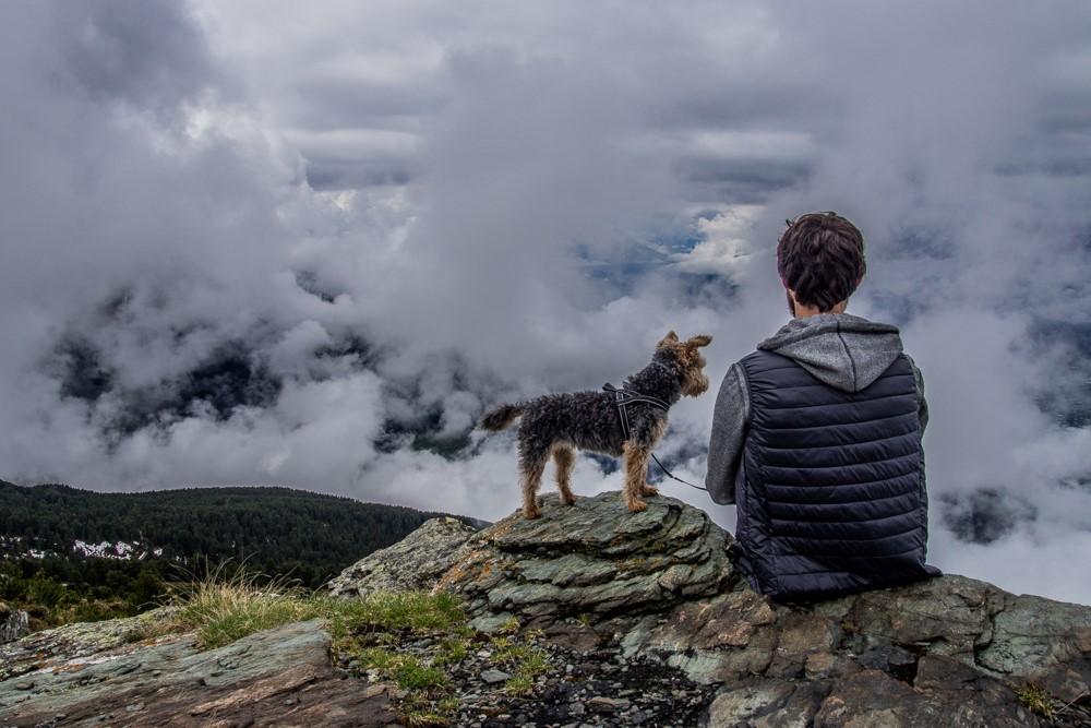 gdzie jechać z psem