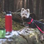jak przygotować się do wyjazdu z psem